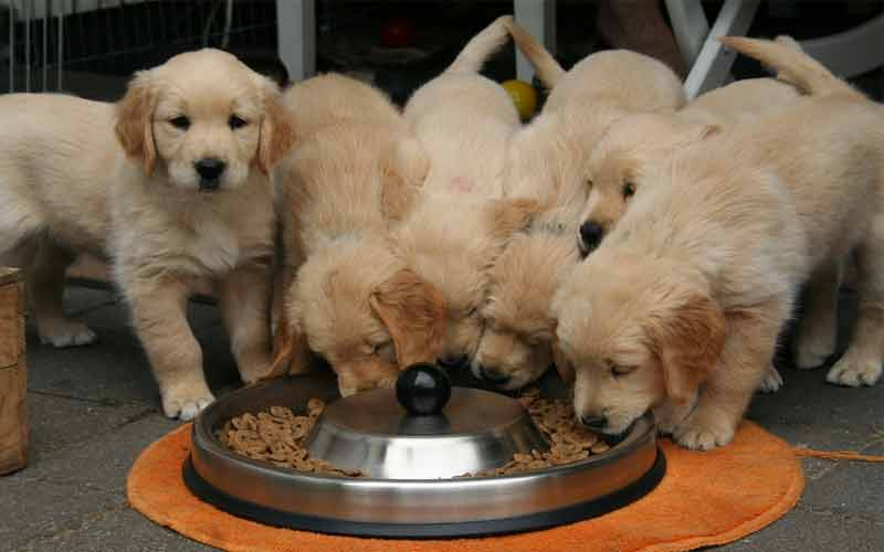 Dogs need to eat a proper meal twice a day