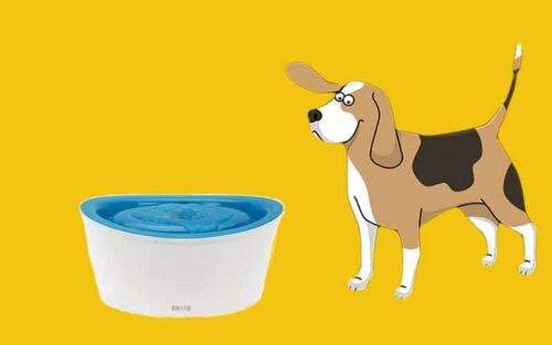 Best Extra Large Dog Water Fountain