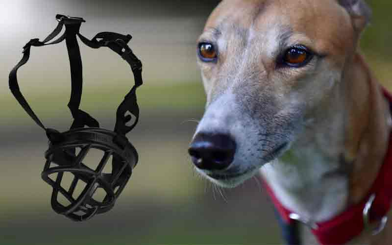 Muzzles for greyhounds