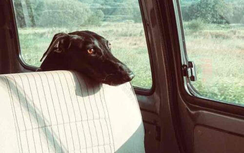 Seat Covers For Dog Hair