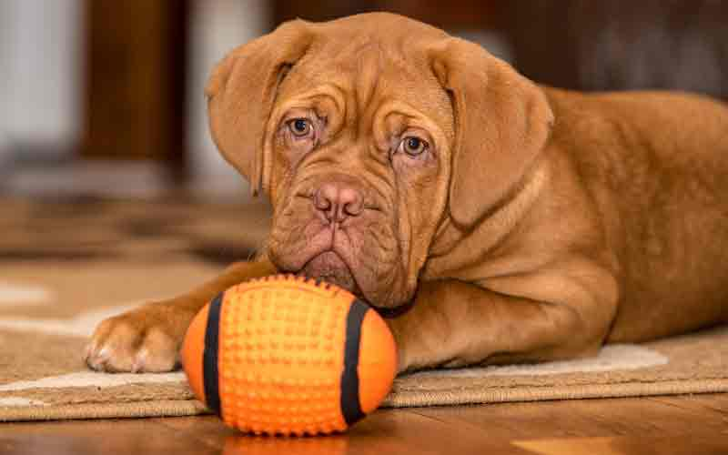 protect your hardwood floors from dog