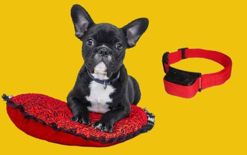 Training Collars For Deaf Dogs
