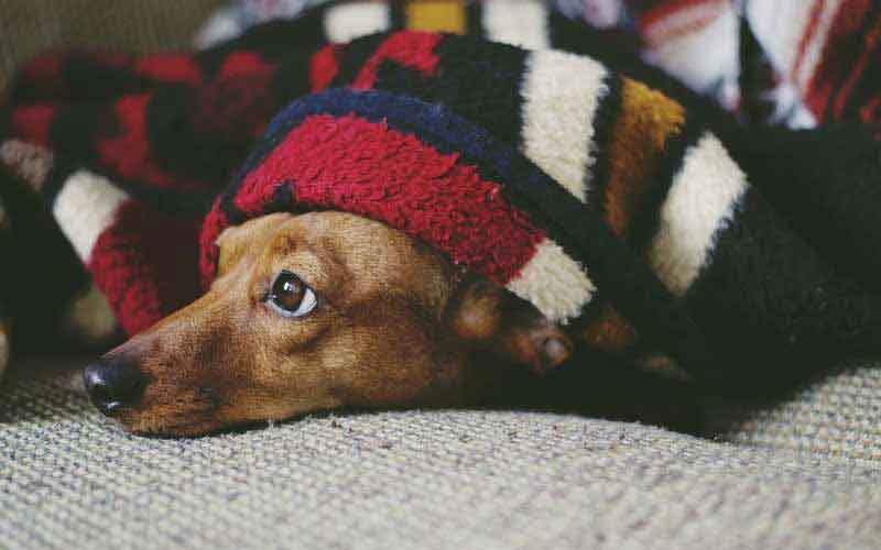 Why do dogs get restless during the night?