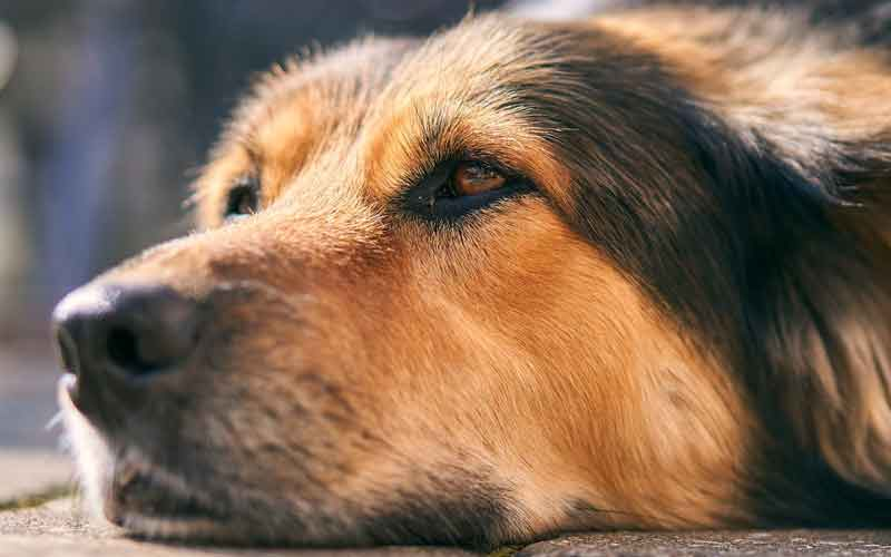 Calming down your furry Dog