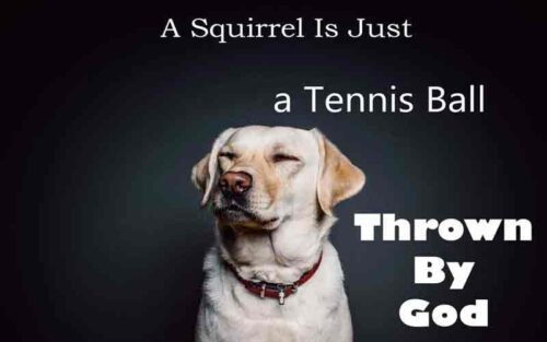 Why Do Dogs Chase Squirrels?