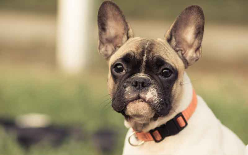 do electronic collars really give out shocks to your canine?