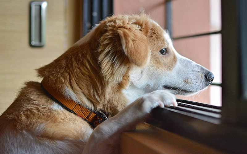 Significance of the Dogs Breed and Tail Tucking