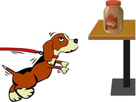 Almond butter for dogs