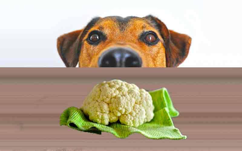 Dangers of Cabbage for Dogs