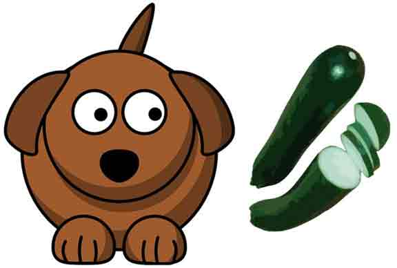 Zucchini and your Dog