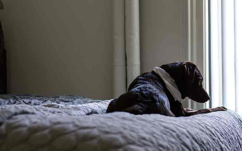 Reasons Why A Dog Pees In Your Bed?