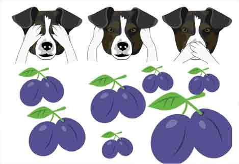 Is it okay for dogs to eat prunes?