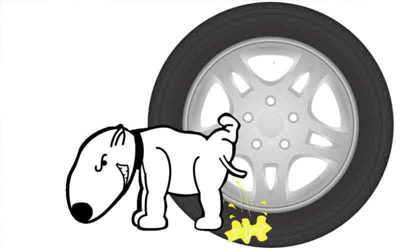 Why do dogs pee on various objects including tires?
