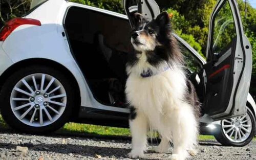 Why Do Dogs Pee On Tires?